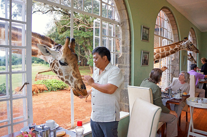 14 Crazy Hotels That Will Give You Serious Travel Goals - Giraffe Manor in Kenya is one of the only hotels in the entire world where you can feed giraffes from the window -- in fact, feeding them is encouraged.