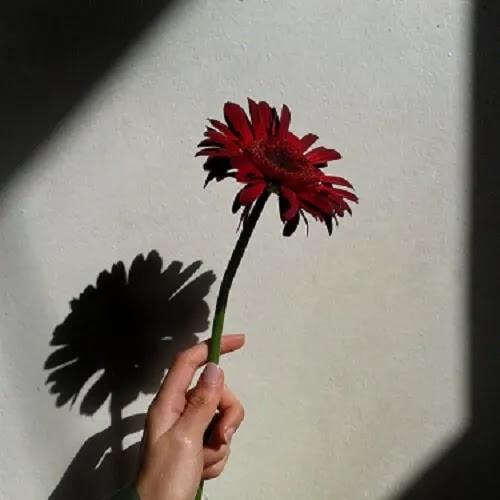 red rose DP for girl