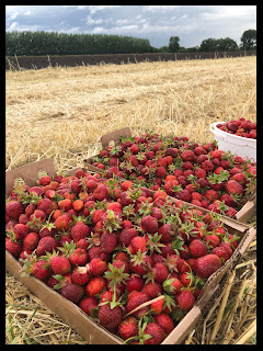 Two brown, cardboard boxes and one white ice cream pail filled with fresh picked strawberries all sitting on a bed of golden hay and a line of green shrubs in the background.