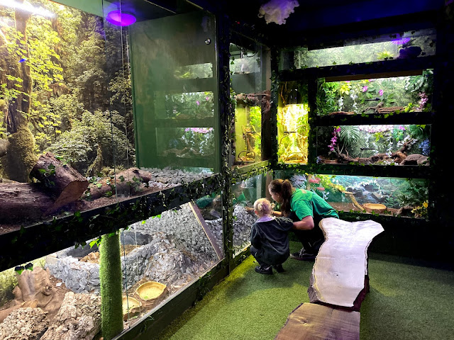 The second room at Get To Know Animals mini Zoo has glass enclosures with reptiles in