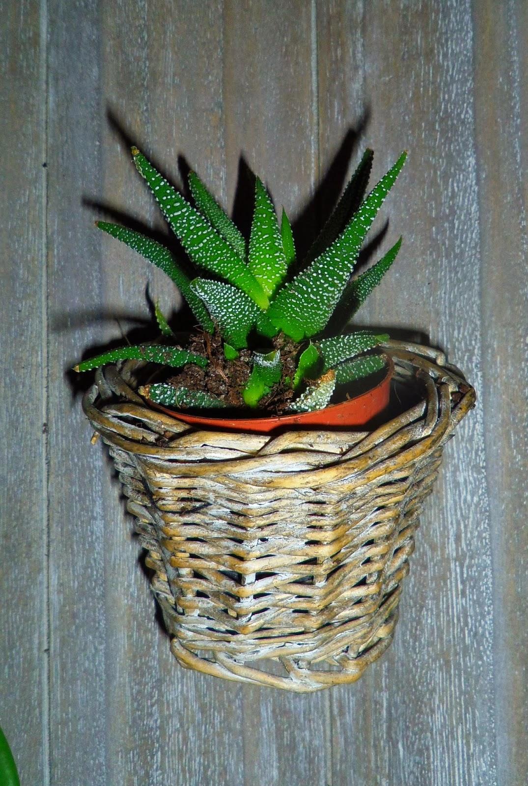 blandinde fait son blog aux petits soins pour mes plantes. Black Bedroom Furniture Sets. Home Design Ideas