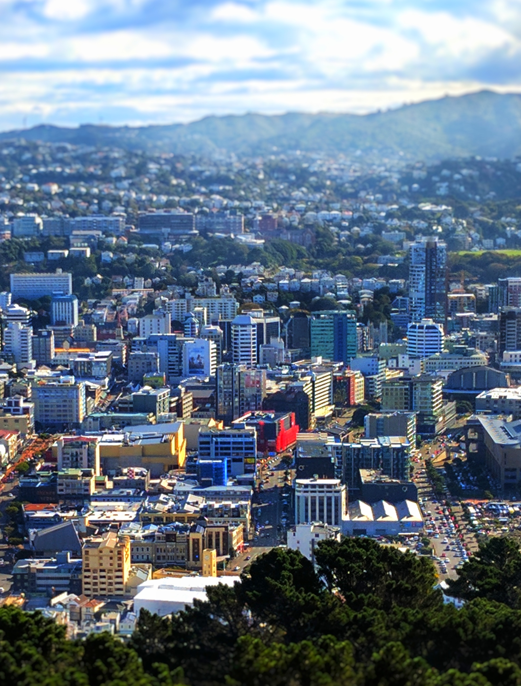 Wellington city from Mt Victoria lookout