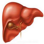 liver in spanish