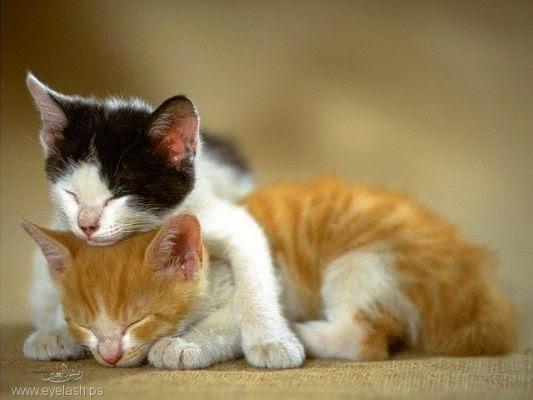 صور غريبه لقطط تصلح كخلفيات للديسك توب