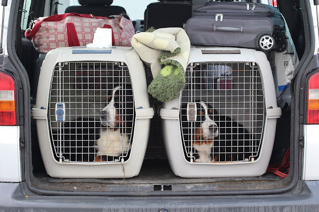 Travelling With Your Fur Kids – Tips For Keeping Them Safe #Pets #ImperialAuto