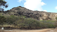 An arid landscape - Koko Crater Botanical Garden, Oahu, HI
