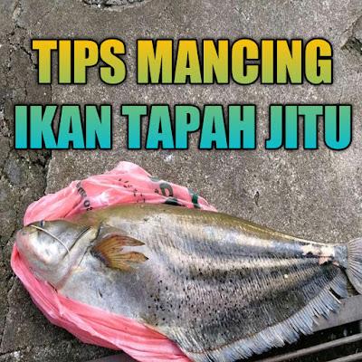mancing ikan tapah besar memang mengasikan bila tau cara memancingnya