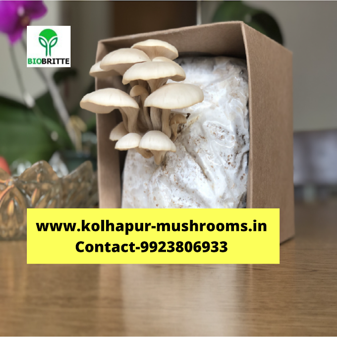 Fresh mushrooms grow kit | biobritte cart | mushroom farming | biobritte store | organic mushrooms