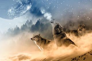 wolf wallpaper border   White Wolf wallpaper