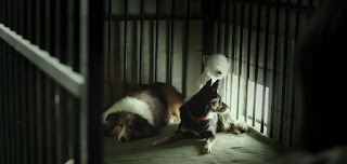 Three dogs in a cage