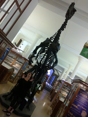 Dinosaur at Sedgwick Museum, Cambridge