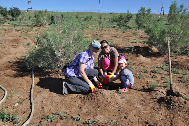 Planting trees in Mongolia's middle Gobi