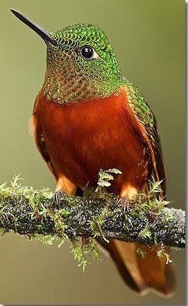 El sem tudjuk képzelni, milyen színkavalkádot látnak a kolibrik | National Geographic