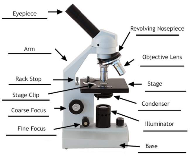 Parts of a Compound Microscope - Labeled (with diagrams ...