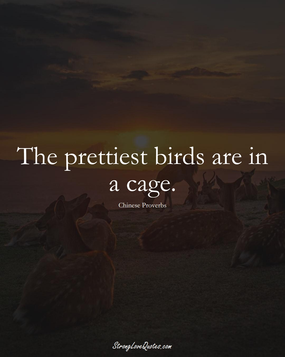 The prettiest birds are in a cage. (Chinese Sayings);  #AsianSayings