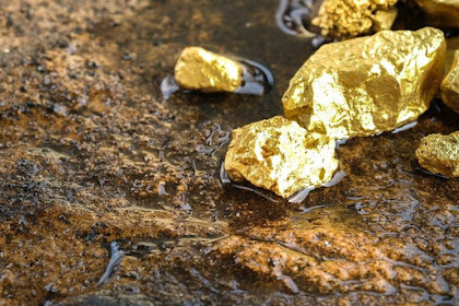 Jenis Jamur sebagai Indikator Ladang Emas
