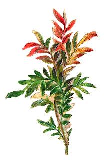 leaves image botanical art illustration clipart download