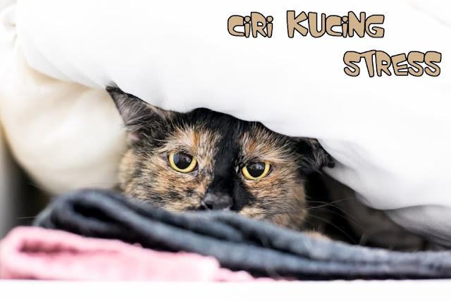 Ciri Kucing Persia Stress