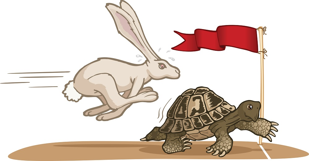 A Short Story On Hare And Tortoise Simple Essay Writing