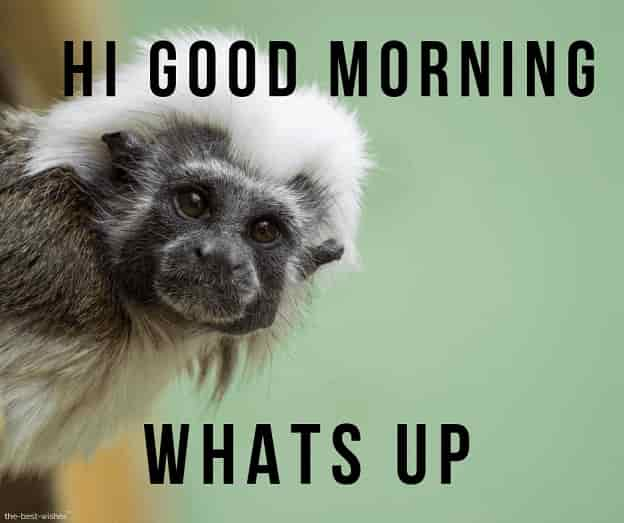 good morning wishes with monkey images