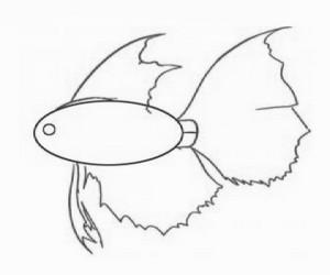 cara+menggambar+ikan+hias