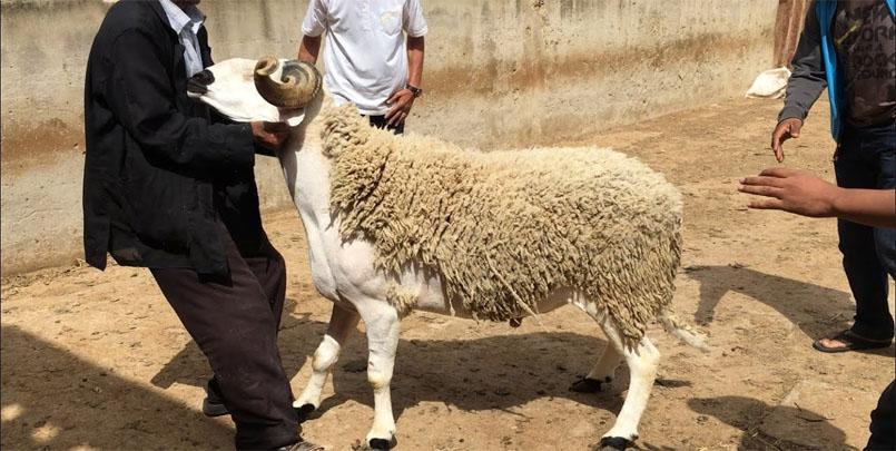 صور عيد الأضحى المبارك+#العيد #الأضحية #عيد_الأضحى_المبارك #غزة+عام 1442 هجري+دخول ذو الحجة 1442+وقفة عرفات+Eid al-Adha
