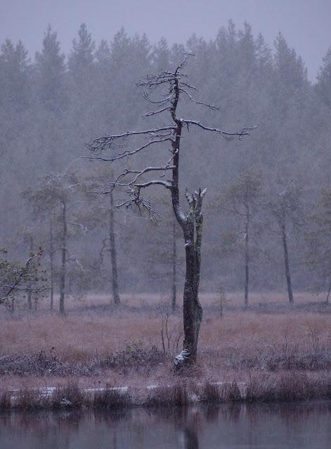 kelo+mustalampi+neige+033.JPG