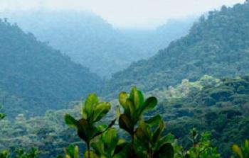 Selva tropical h meda - El tiempo en macanet de la selva ...