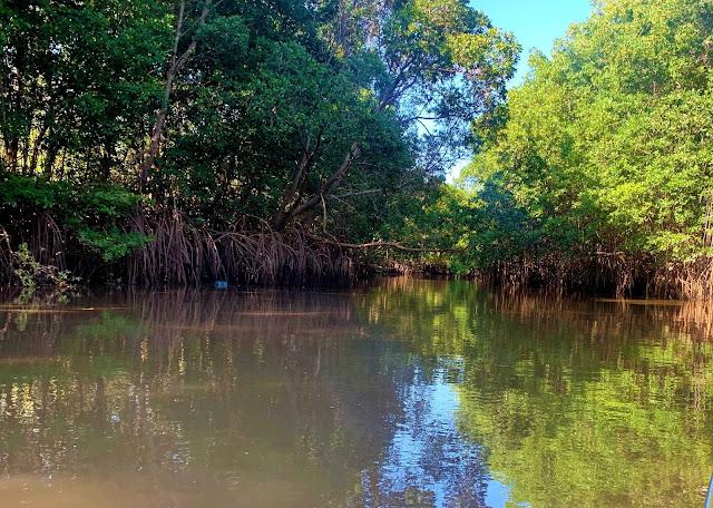 mata aquatica em um rio