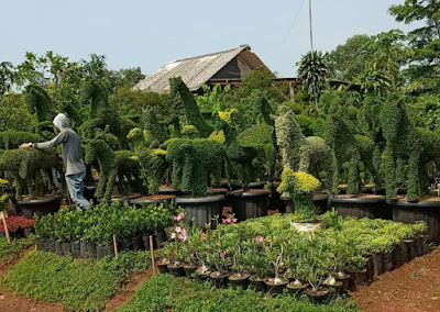 Jual Tanaman Hias - Tukang Rumput Bogor