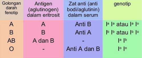 Pengertian dan Macam-macam Jenis Golongan Darah serta Sifat-sifat Golongan Darah A, AB, B dan O