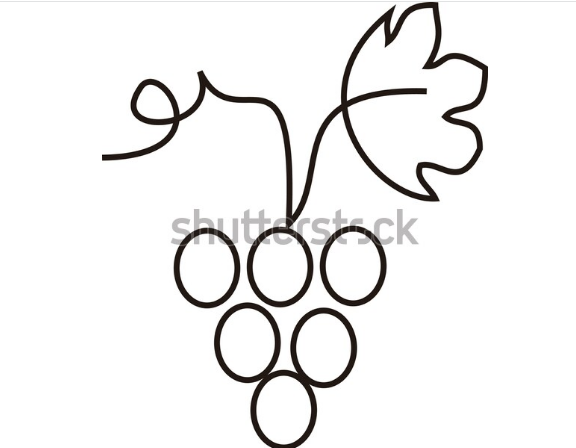 illustration artist grape