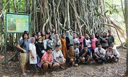 pohon kiara pulau peucang