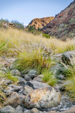 Wanderung zu den Wasserfällen im Barranco del Toro | San Agustín/Maspalomas | Wandern auf Gran Canaria 08