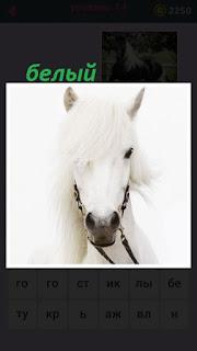 655 слов голова белой лошади с поводьями 14 уровень