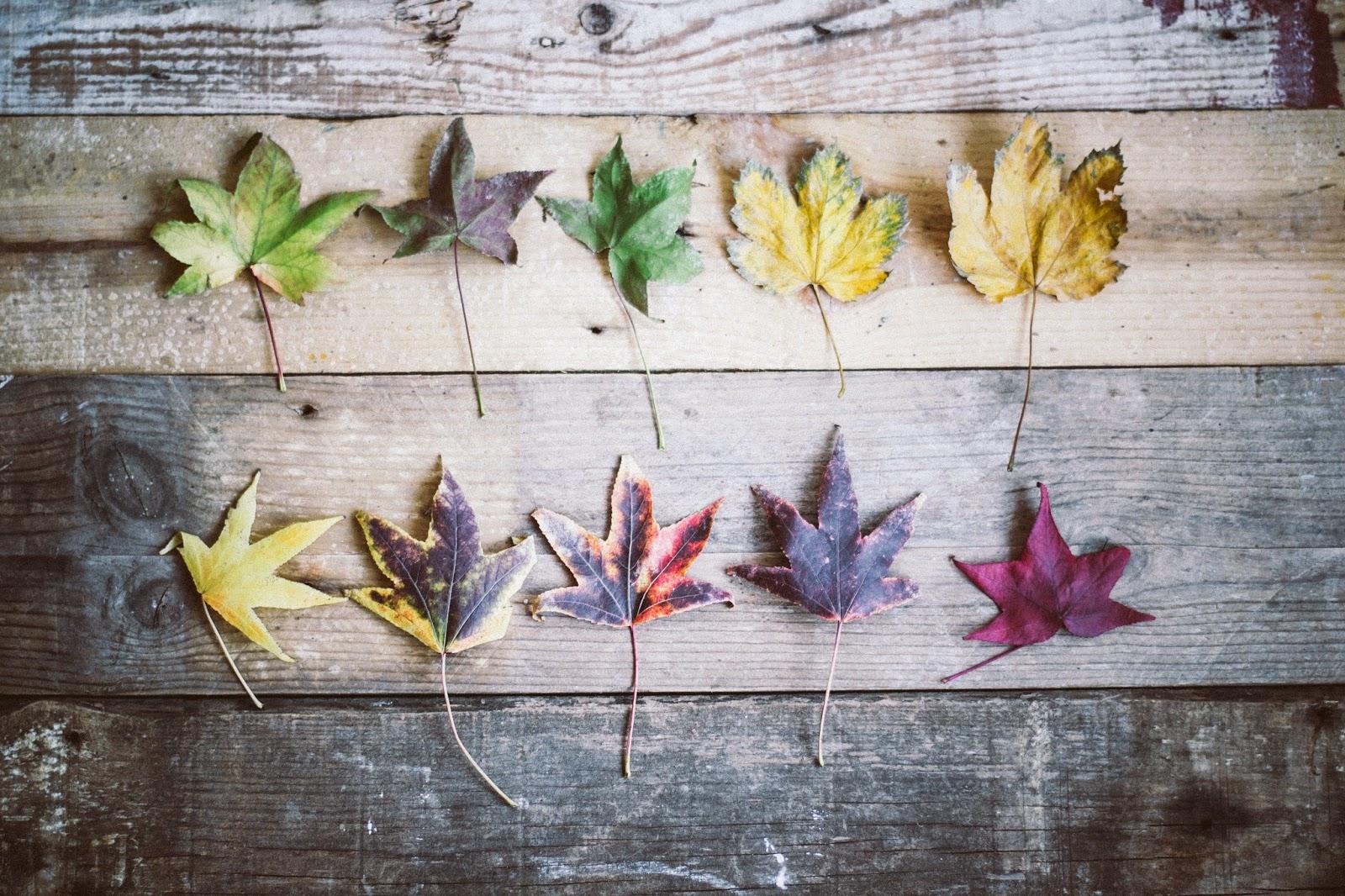 Reflexiones de otoño