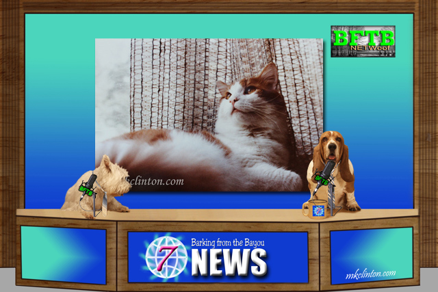 Dogs reporting the BFTB NETWoof News on therapy cats