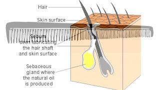 Benefits of Wide Teeth Combs