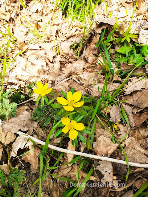 Wiosna w Toskanii Dom z Kamienia blog