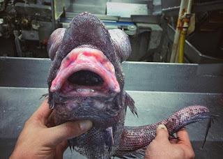 ikan alien dari dasar laut