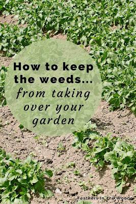Weed free garden plot