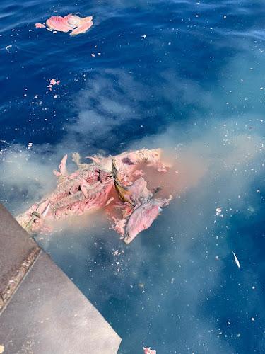 IMG 20200904 WA0002 - Como todos los años los arrastreros de Santa Pola cogiendo atunes en descomposición