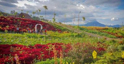 Keindahan Wisata Alam Kebun Efi di Tanah Karo Sumatera Utara