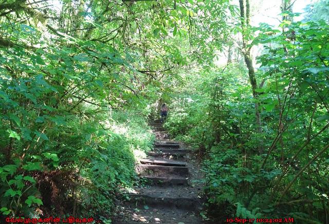 Cascade Head Natural Area Trail