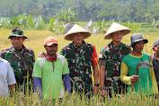 Aksi Nyata TNI AD, Sejahterakan Petani