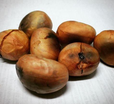 seed cempedak