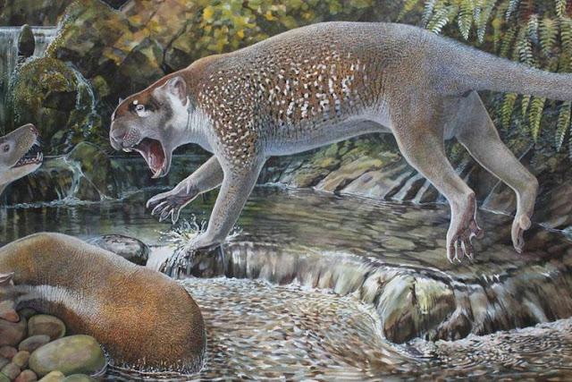 singa marsupial