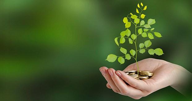 Bagaimana Cara Tanam Investasi yang Aman?