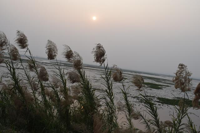 Kans grass | Wild Sugarcane | Amazing images