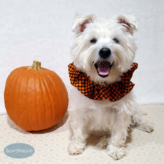 Halloween Pet Scrunchie Ruffle, Orange and Black Checkered Plaid